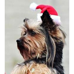 Kerst hoed voor kleine tot middel grote honden