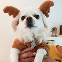 Bruin wit rendier pakje voor de hond