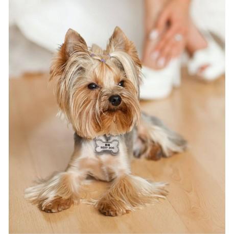 Bedel met de tekst Best Dog voor aan de riem van je hond
