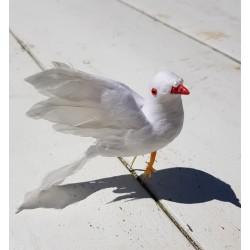 Witte duif met veren vleugels op 2 stekers