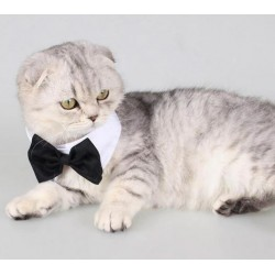 Chique zwarte dasstrik op wit boord voor de kat