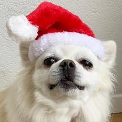 Heerlijk zacht kerstmutsje voor de hond
