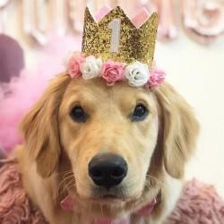 Aandoenlijk glitter hoedje voor de eerste verjaardag van de hond roze