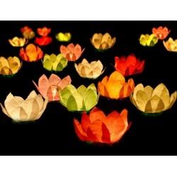 Waterlantaarn: per pak met 6 lotusbloemen
