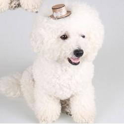 Mini hoedje op clip voor honden